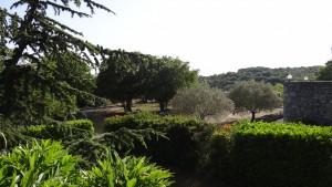 1 Notre terrain ombragé et ses oliviers